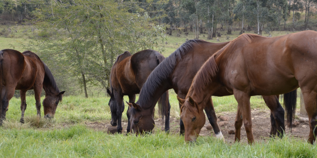 The_features_3._Horses_grazing_in_the_paddocks